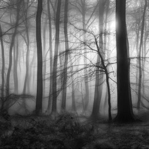 BW Woodlands