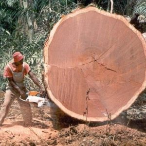 tropical logging